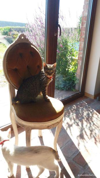 Krzesło dla Panicza!