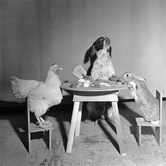 A hen, a dog and a rabbit playing cards, circa 1956. (Photo by Evans/Three Lions)