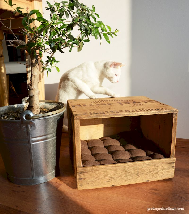legowisko dla pupila z drewnianej skrzyni
